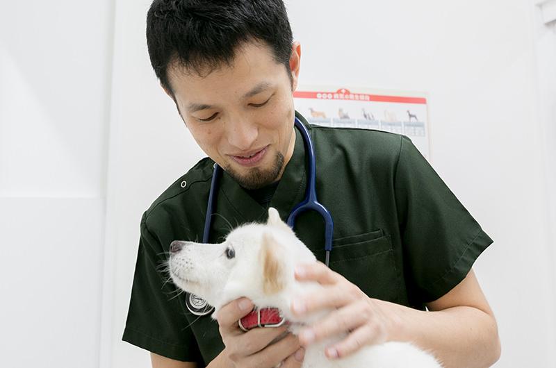 このサイトは「去勢・避妊手術」と「健康診断」についてのサイトですがこれからペットに手術を受けさせる飼い主様にお伝えしたいことは?